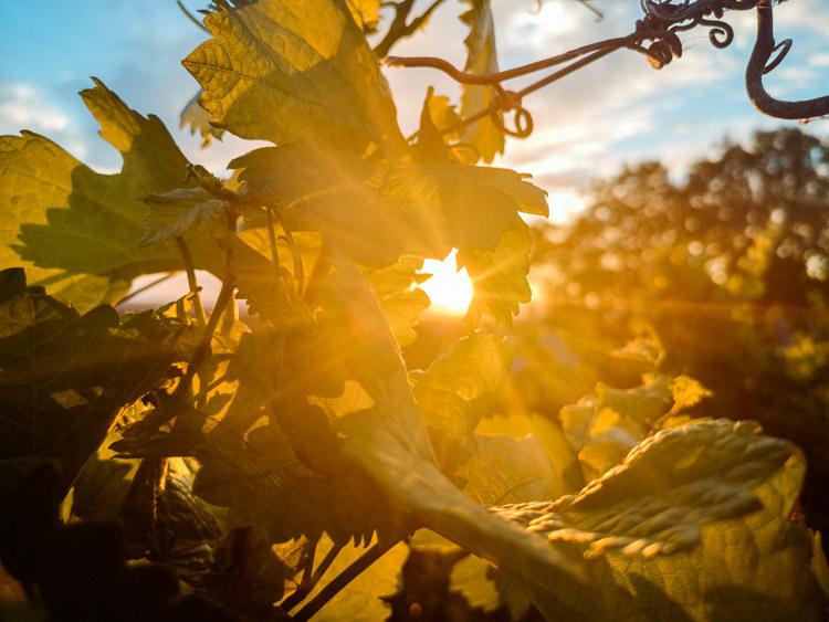 komorebi sunlight shining through tree leaves
