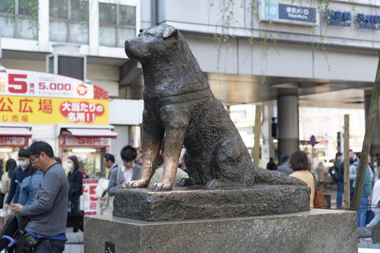 hachiko statue akita inu