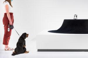 dog in asif kham designed dog house