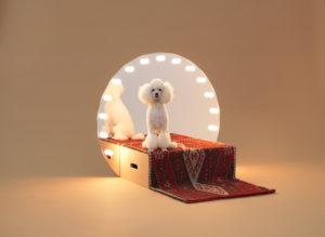 poodle in konstantin grcic designed dog house