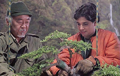 bonsai trees karate kid